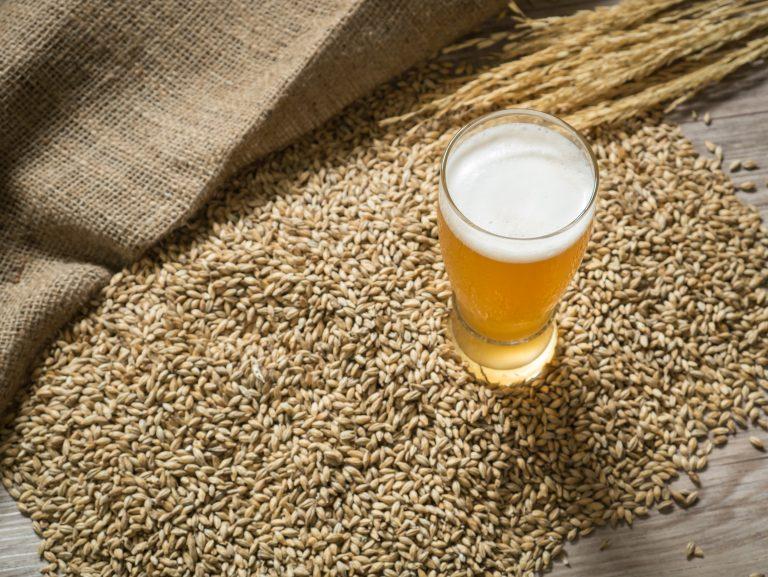 beer glass on grains